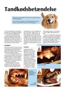tandkoedsbetaendelse