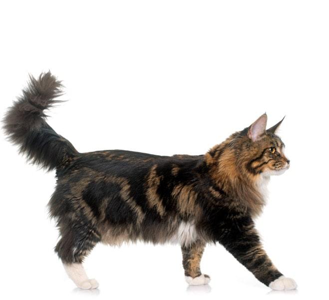 kat der går på opdagelse
