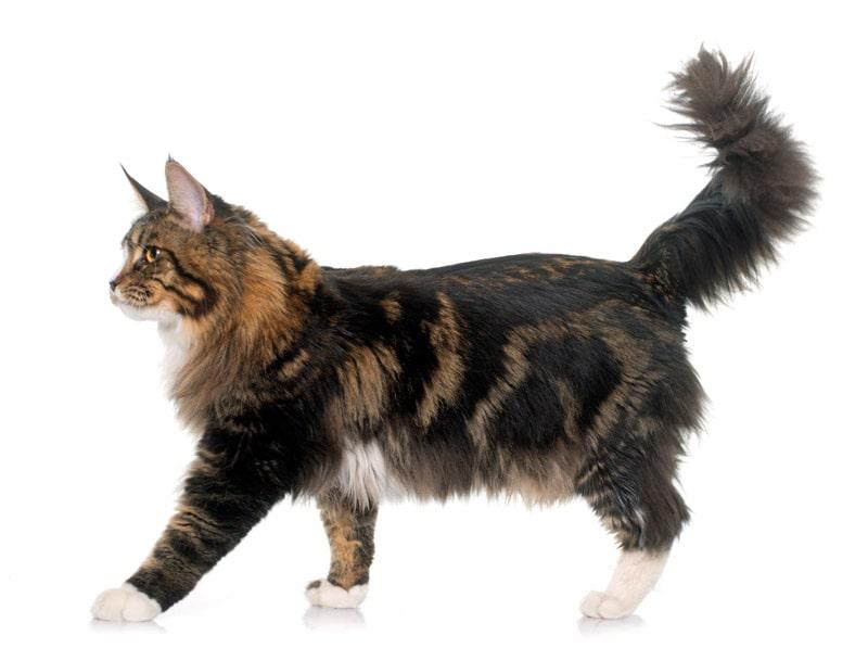 Kat der går